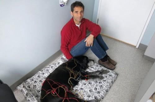 Tratament cu ACUPUNCTURĂ pentru câini și pisici