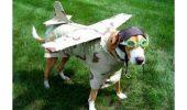 E bine de stiut! Conditii de zbor cu animale!