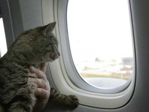 animale_in_avion