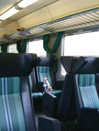 Stiti cum puteti transporta animale, cu trenul?