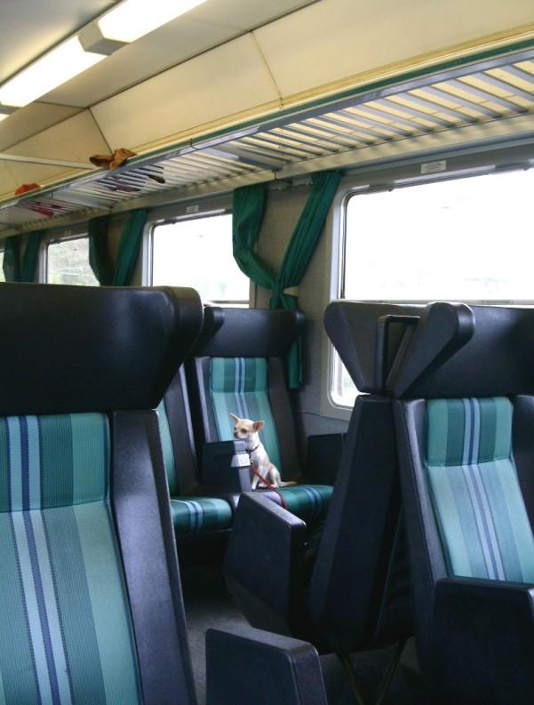 caine in tren 2