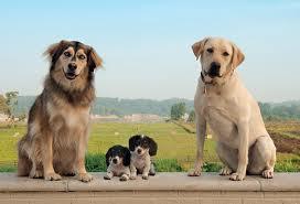 S-a deschis Dogfidelity – reteaua de socializare pentru caini