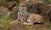 Aproape 23.000 de specii amenintate cu disparitia, in lume