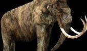 Le Figaro – despre stramosul elefantului, gasit la Gherghesti