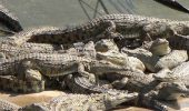 Fara genti Hermes din piei de crocodil
