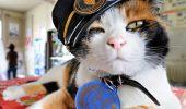 "Pisica ""Nitama"" – noua sefa de gara, in locul Tamei"