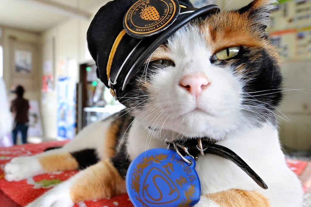 pisica tama 2