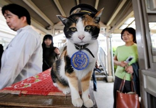 """Wearing a stationmaster's cap of the Wakayama Electric Railway, the nine-year-old female tortoiseshell cat named """"Tama"""" sits on a ticket gate at Kishi station on the Kishigawa line in the city of Kinokawa, in Wakayama prefecture on May 22, 2008. The number of passengers who travel along the line increased 10 percent for the year to March 2007 from the previous year, credited to Tama after the """"stationmaster"""" cat appeared at the unmanned small station.   AFP PHOTO/Toru YAMANAKA (Photo credit should read TORU YAMANAKA/AFP/Getty Images)"""