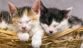 A inchis trei pisici intr-un beci si le-a lasat sa moara acolo…???