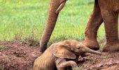 Cea mai clara dovada ca si animalele au sentimente