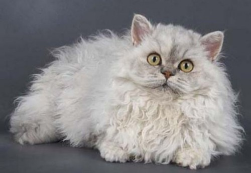 Parada celor mai frumoase pisici ale lumii!