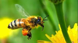 Mortalitate umana crescuta din cauza declinului insectelor polenizatoare