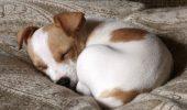Britanicii vor schimbarea legislatiei pentru comertul online cu animale de companie