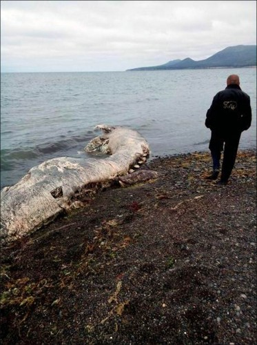 Resturile unei creaturi ciudate, pe insula Sakhalin