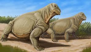 dinocephalia1