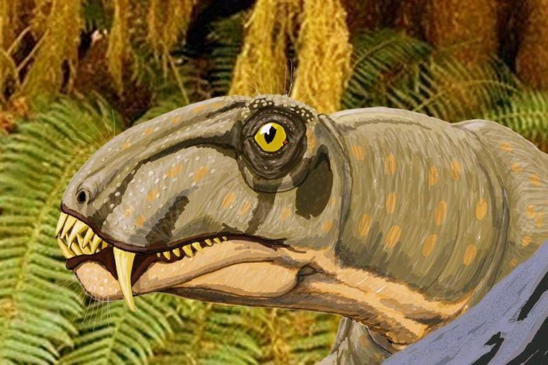 dinocephalia2