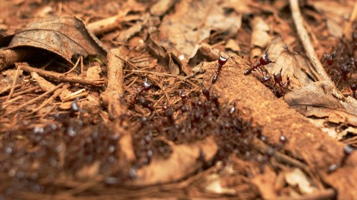 Adevarul despre furnici