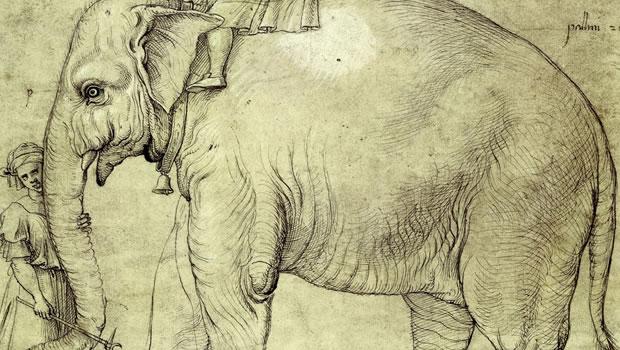 elefantul hanno