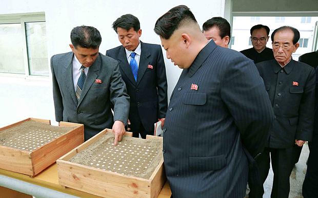 kim-jong-un ferma