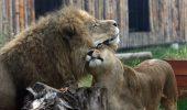 lei zoo baneasa