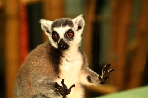 lemurian zoo baneasa