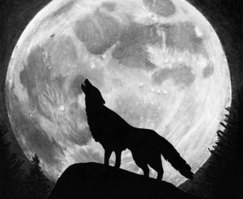 Efectele lunii pline asupra animalelor