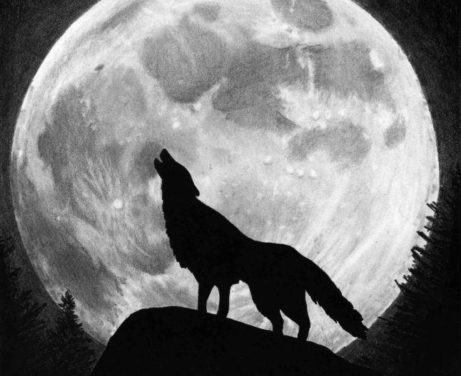 lup luna plina