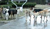 Campanie de sterilizare a cainilor cu si fara stapan