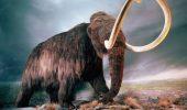 Mamutii ar putea fi reinviati!