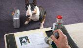 Calatoria europeana non-comerciala a animalelor de companie