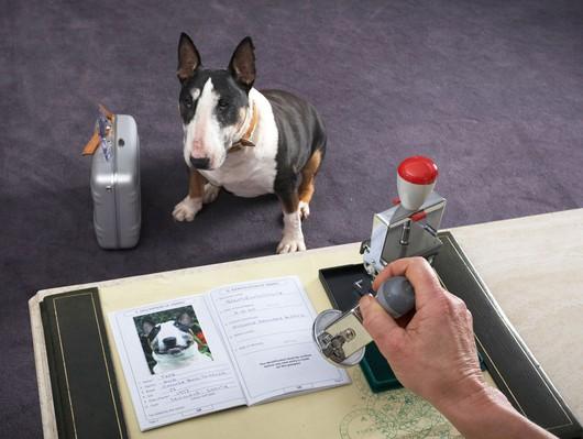 passport_dogs_2