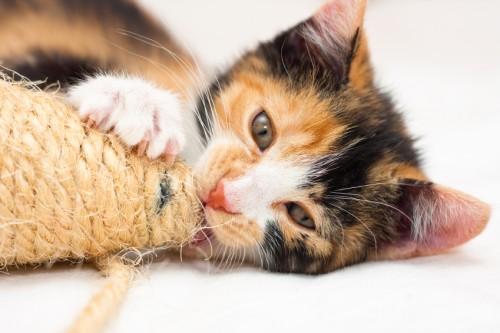 Vreau si eu o pisica…
