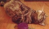 pisica ametita2