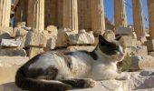 pisica in grecia