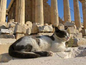 Scene care ar indigna pe oricine, vezi ce au făcut niște turiștii în Grecia
