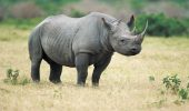 rinocer 2