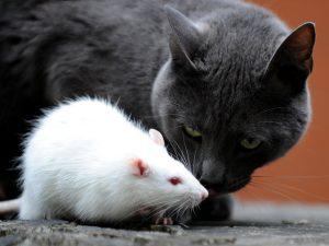 Ce boli pot transmite animalele de companie?