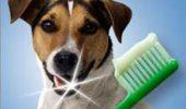 Un caine care a inteles importanta spalarii pe dinti!