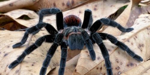Paianjenii si scorpionii vii mai raman la Antipa
