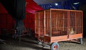 MEXICO-ANIMALS-CIRCUS-LAW