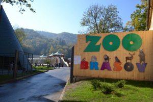 Un panda rosu sau un urs cu ochelari, la Zoo Brasov?
