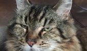 Cea mai batrana pisica din lume