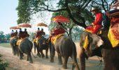 Un elefant si-a ucis insotitorul si a fugit cu turistii de pe spinarea sa