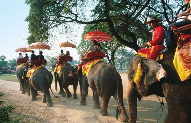 Elephant plimbare