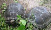 ÎNGRIJORĂTOR! Comerțul ILEGAL cu țestoase ocrotite de lege, în România. Uite cât costă un exemplar