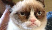 Expozitie cu pisici vedete ale internetului