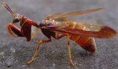 Stiati ca o viespe poate transforma paianjenii in sclavi zombi?