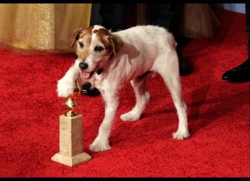 """A murit Uggie, cainele vedeta din filmul """"The Artist"""""""