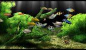 Cat ne costa pestii dintr-un acvariu?