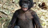 Maimute care scot aceleasi sunete ca oamenii
